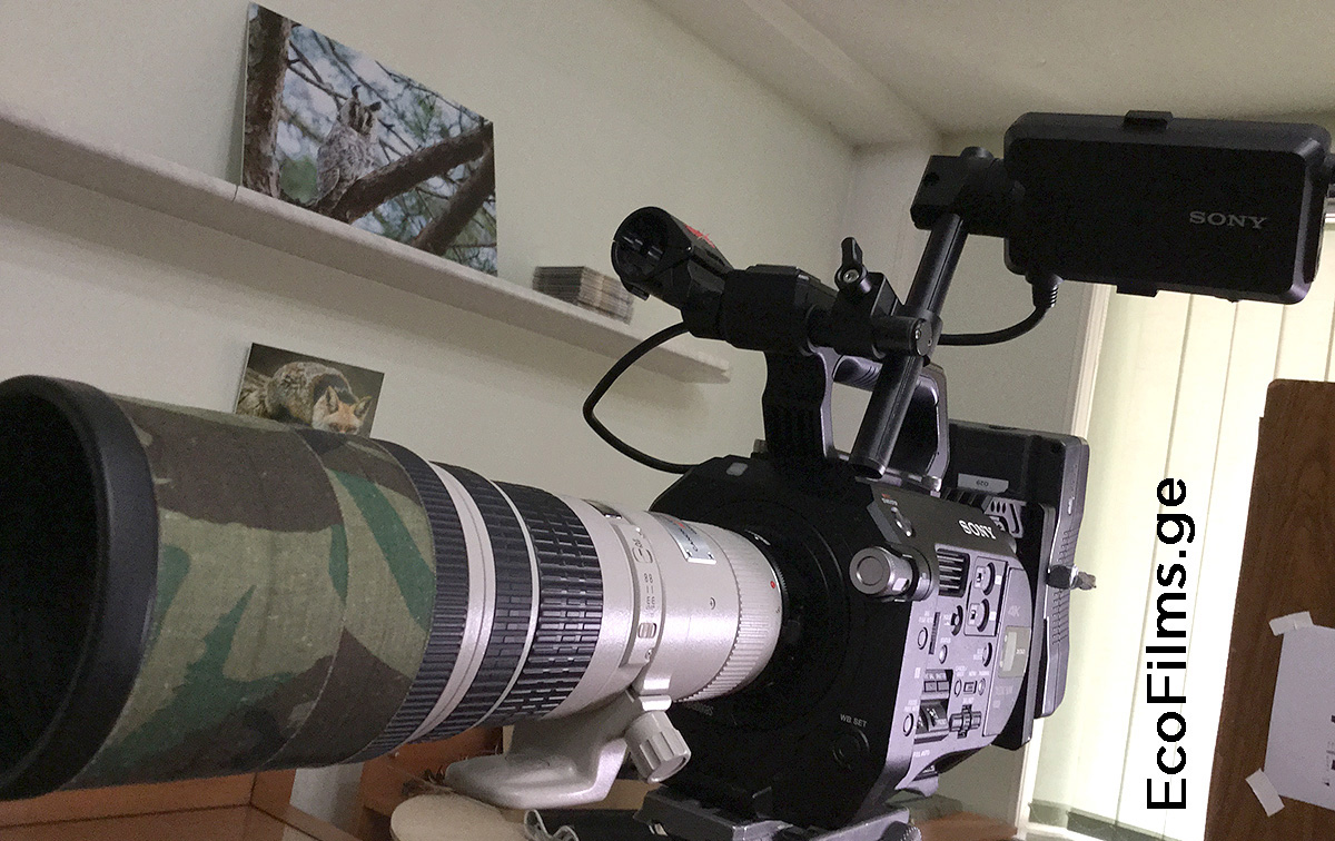 Sony FS7 Canon 400mm