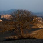 Pistachio tree, Vashlovani National Park